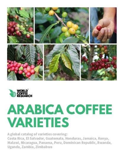 Coffee Varieties Catalog  Goes Global